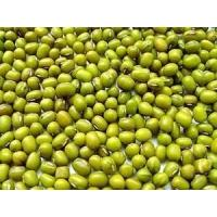 Wholesale Green Mung Beans from china suppliers