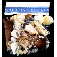 Wholesale Seashell Packs from china suppliers
