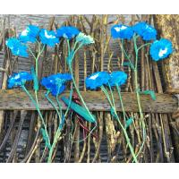 Wholesale Customized Real Dried Pressed Flowers Bracelet Blue Daisy With Stem from china suppliers