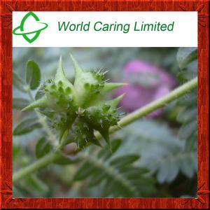 Herbs that work like viagra