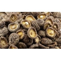 Wholesale 10.0% 20.0% Polysaccharide Shitake Mushroom Extract from china suppliers