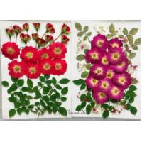 Raw Material Dried Pressed Flowers Eternal Plant For Cell Phone Case Decoration