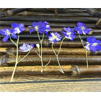 Wholesale Candle Decoration Dried Flower Art , Larkspur With Stem DIY Pressed Flowers from china suppliers