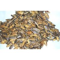 sell large sunflower seed 5009 in bulk with low price
