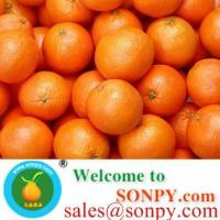 Wholesale shatang orange,baby orange from china suppliers
