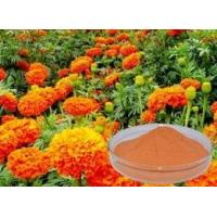 China Marigold Extract 、 Lutein 5%/10%/20%/80%、Zeaxanthin 5%/10%/20%/70%、 Lutein Esters 5%/10%/20%/80% wholesale