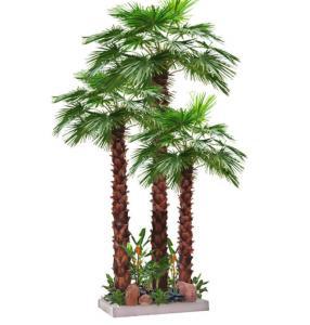 tropical indoor plants images buy tropical indoor plants. Black Bedroom Furniture Sets. Home Design Ideas
