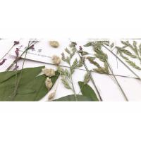 Wholesale Original Wild Grass Weed Large Pressed Flowers For Aroma Wax Candles from china suppliers