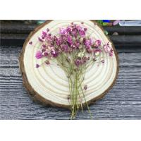 Wholesale DIY Handmade Long Dried Flowers , Babys Breath Materials Real Dried Flowers from china suppliers
