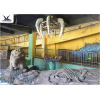 Wholesale Indoor Museum Life Size Dinosaur Replicas , Sunproof Dinosaur Skeleton Replica from china suppliers