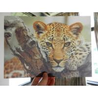 Wholesale OK3D whole 3D animal Printing photo with strong 3d deep depth effect printed by UV offset printer from china suppliers
