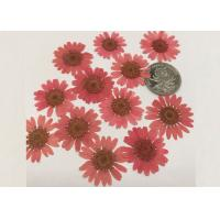 Wholesale Mirror Decoration Dried Pressed Flowers Material For DIY Handicrafts from china suppliers