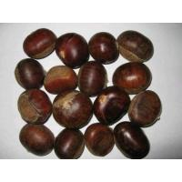 Wholesale Chestnut and Chestnut Kernels from china suppliers