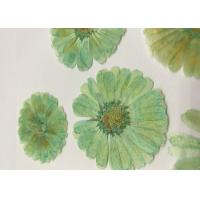 Wholesale Mint Green Dyed Dried Pressed Flowers Handmade For Press Art Painting Material from china suppliers