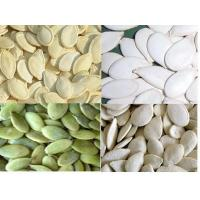 Wholesale sunflower seed kernels (bakery) from china suppliers