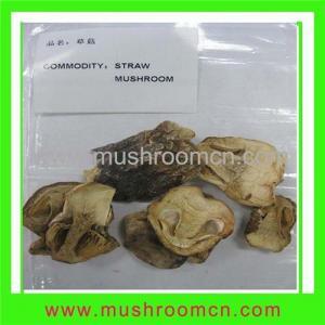 China Straw Mushroom on sale