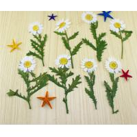 Wholesale Small Chrysanthemum Dried Pressed Flowers Size Customized For DIY Christmas Card from china suppliers
