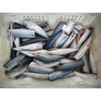 Wholesale frozen mackerel from china suppliers