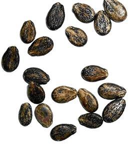 Black small watermelon seeds