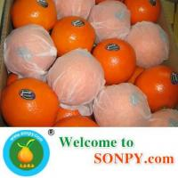 Wholesale Fresh Orange from china suppliers