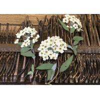 Wholesale White Small Flower Dried Pressed Flowers For Epoxy Iphone 7 Phone Case from china suppliers