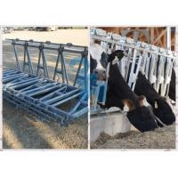 Wholesale Durable  Feeding Equipment Headlock Fence from china suppliers