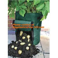 how to grow a potato plant in water