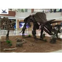 Wholesale Amusement Park Facility Life Size Dinosaur Skeleton Replica Artificial Replica Model from china suppliers