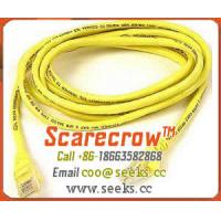 Wholesale Scarecrow™ PATCH10 Patch Cord CAT5E 10FT from china suppliers