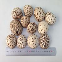 Wholesale Factory Price Dried White Flower Mushroom Whole 3KG with Cap 3-4 CM from china suppliers