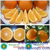 navel orange,fresh orange,mandarin orange
