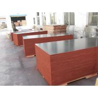 Quality Film Faced Decorative Plywood Sheets 2 Times Hot Press High Strength Design for sale