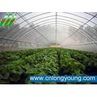 Wholesale single span agricultural greenhouse from china suppliers