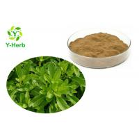 China Best Quality 10:1 50:1 100:1 5% Flavones Pure Powdered Gynura Procumbens Extract on sale