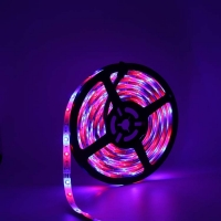Wholesale SMD2835 Dreamcolor RGBIC Led Strip Light With Jazz Up Your Space from china suppliers