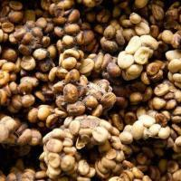 Wholesale Coffee with Fresh Frutty and Vanilla Aroma from china suppliers