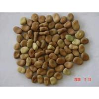 Wholesale Broad Beans from china suppliers