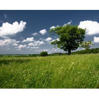 Wholesale SGS artificial lawn used for landscaping from china suppliers