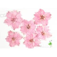 Wholesale Eternal Floral Dried Pressed Flowers Larkspur Diameter 3CM For Christmas Decorations from china suppliers