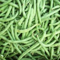 Wholesale Red speckled kidney beans from china suppliers