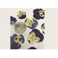 Wholesale Purple Pansy Real Pressed Flowers True Plant Material For Press Picture Ornaments from china suppliers