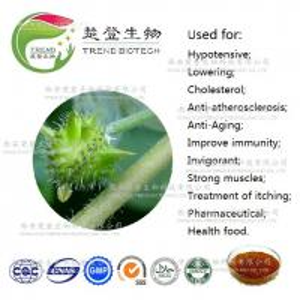 Wholesale Nutritional Supplements tribulus terrestris, Sex medicine sexual performance enhancer tribulus terrestris extract from china suppliers