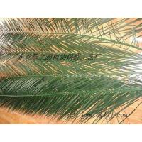 Wholesale preserved phoenix canariensis leaves from china suppliers