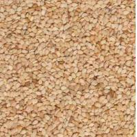 Wholesale Nuts and kernels White sesame seeds from china suppliers