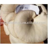 Wholesale Oyster Mushroom from china suppliers