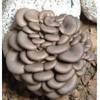 Buy cheap Oyster polysaccharide from wholesalers