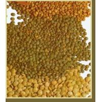 Wholesale Lentils from china suppliers