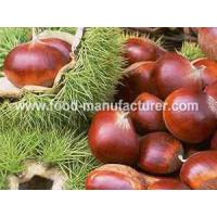 Wholesale Freeze Dried Fruit Freeze Dried Chestnut from china suppliers