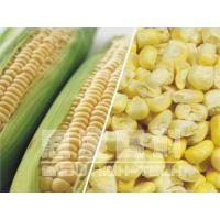 Wholesale Freeze-dried Corn from china suppliers