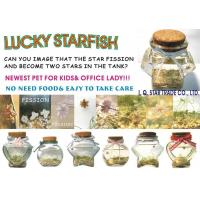 Wholesale Lucky Star Fish Lucky Starfish from china suppliers